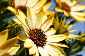 flower-108685_960_720